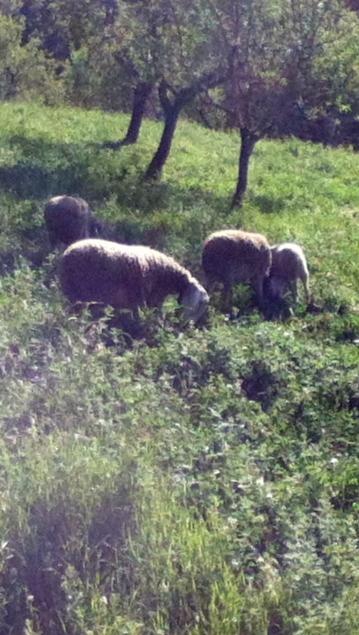 Alpujarran Lawn-mowers.